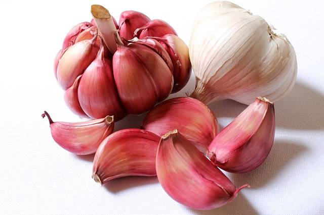 Free photo: Garlic, Purple Garlic - Free Image on Pixabay - 618400 (1255)