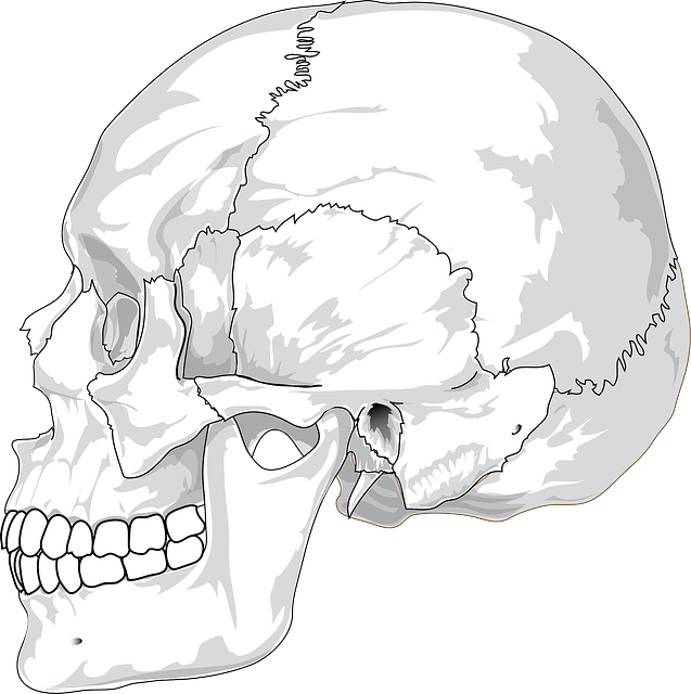 Free vector graphic: Skull, Cracked, Head, Skeleton - Free Image on Pixabay - 31060 (4155)