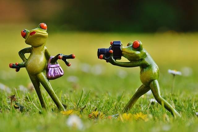 Free photo: Frog, Photographer, Model - Free Image on Pixabay - 1347642 (5350)