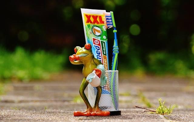Free photo: Toothpaste, Frog, Toothbrush - Free Image on Pixabay - 1446156 (5657)