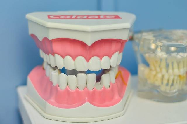 Free photo: Mouth, Tooth, Macromodelo, Dentist - Free Image on Pixabay - 1437426 (6028)