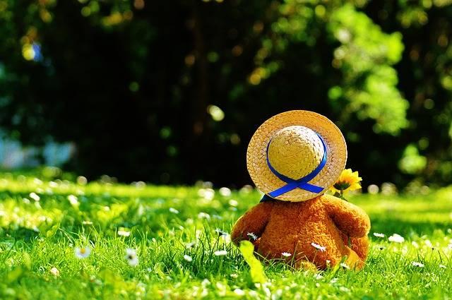 Free photo: Teddy Bear, Bear, Bears - Free Image on Pixabay - 797577 (11135)