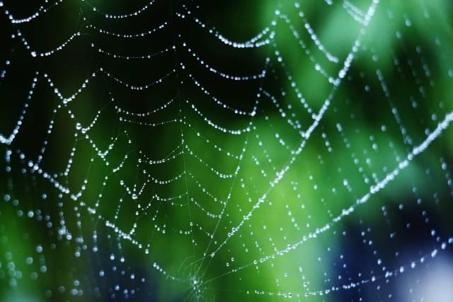 羽田圭介、加藤シゲアキ出版記念イベントの裏側明かす「三次会では蜘蛛を食べ…」