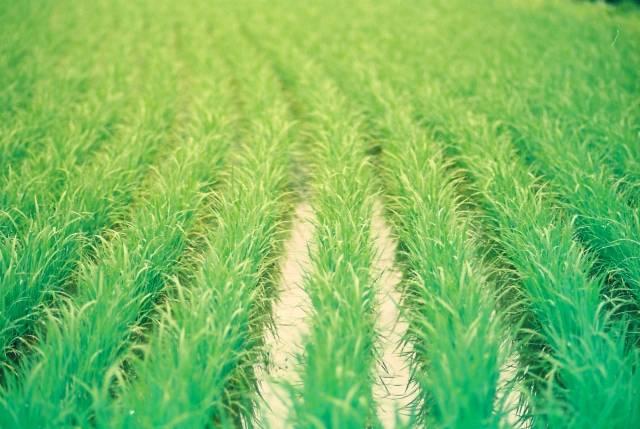 TOKIO城島茂が農業関連の有識者会議メンバーに!ネット反響「さすがリーダー」「もはや農業が本業」