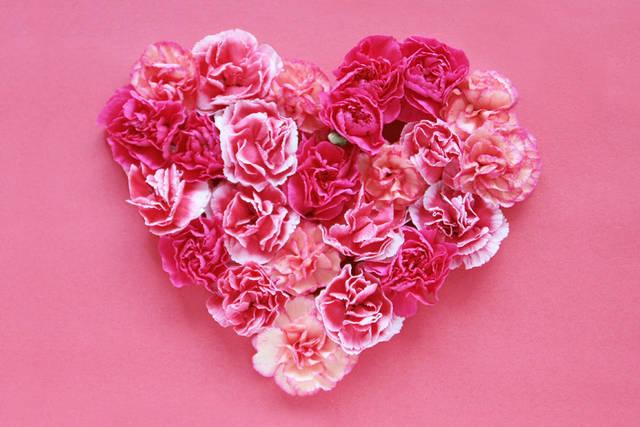 [フリー写真] ピンク色のカーネーションのハートでアハ体験 -  GAHAG | 著作権フリー写真・イラスト素材集 (2083)