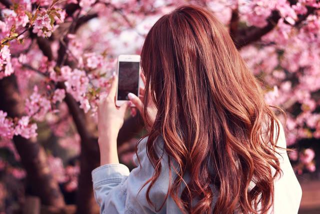 iPhoneで桜の写真を撮影する女の子のフリー写真画像|GIRLY DROP (3106)