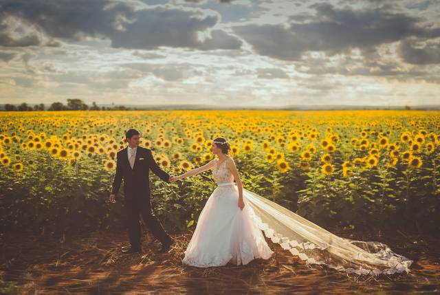 Free image of flowers, sunflower, marriage - StockSnap.io (6448)