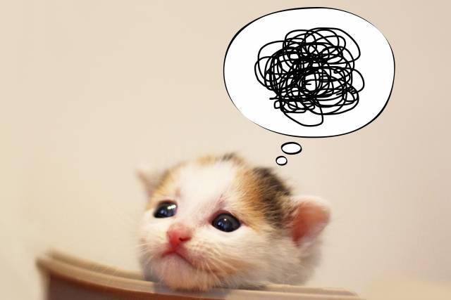 ふきだし子猫|写真素材なら「写真AC」無料(フリー)ダウンロードOK (9566)