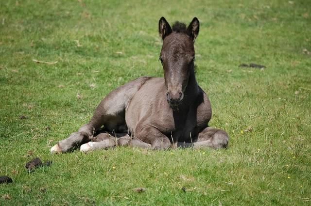 無料の写真: ダートムーア子馬, 動物, 馬, コーンウォール, イングランド - Pixabayの無料画像 - 2149728 (9761)