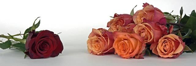 無料の写真: バラ, 花, バラの花, 香り, 植物, 花の花束, 美しい, 花束 - Pixabayの無料画像 - 1706452 (11284)