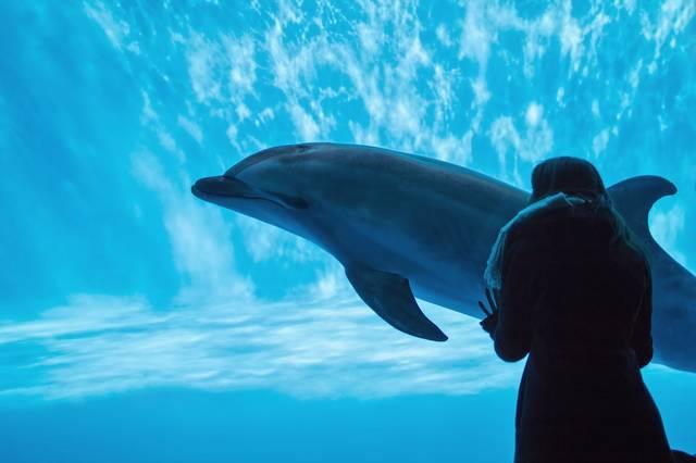 水族館のイルカと水槽越しの女性|フリー写真素材・無料ダウンロード-ぱくたそ (11452)