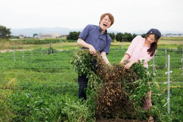 夫婦で力を合わせて落花生を収穫|ぱくたそフリー写真素材 (14758)