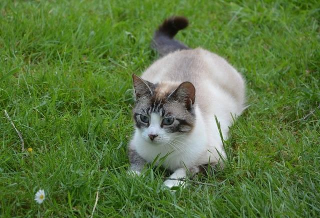 Free photo: Cat, Matou, Feline, Kitty, Twink - Free Image on Pixabay - 2425609 (17146)