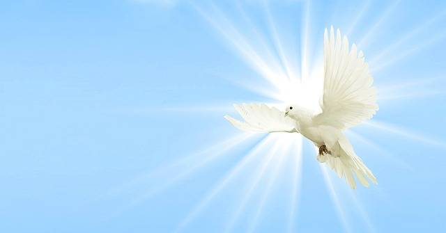 Free photo: Dove, Sky, Peace Dove, Wing, Bird - Free Image on Pixabay - 2901815 (17214)