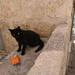 クロアチアの猫と遊ぶ!_和風デンタルトイ_i_love_pets