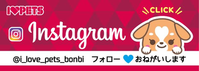 I♥LOVE PET 公式instagram