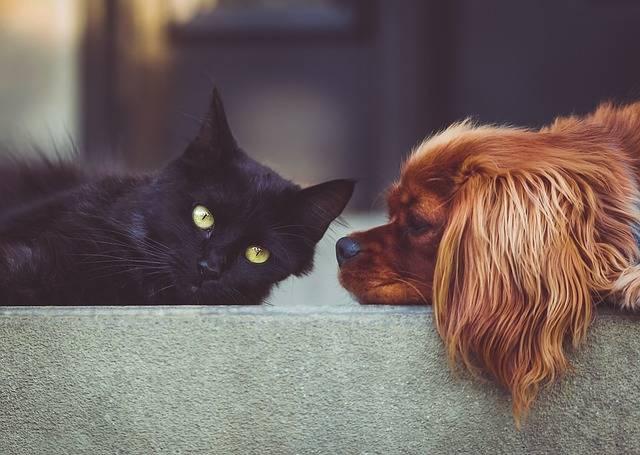 Dog Cat Pets · Free photo on Pixabay (3845)