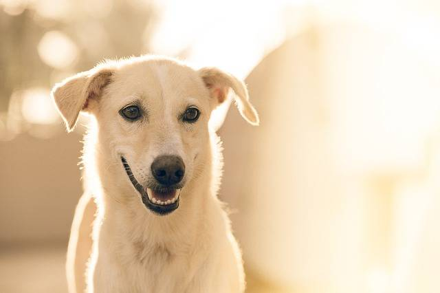 Adorable Dog Pet · Free photo on Pixabay (3846)