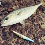 千葉のショアジギングのおすすめポイント5選!釣り場の情報まとめ