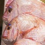 夏に釣れる魚とは?6月・7月・8月に狙える魚種を紹介
