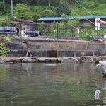 奥多摩の釣り堀6選!都心から2時間で自然を見ながら釣りを楽しもう