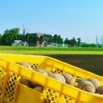 山形県の野球の強豪高校とは?強さ順に10校をランキングで紹介!