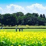 キャッチボールできる公園7選!大きい公園で親子で野球しよう【東京・神奈川など】