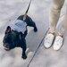 犬の散歩でダイエットしたい!飼い主はドッグウォーキングで痩せることができるの?