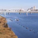 江戸川のシーバスポイント8選!スズキの釣果は河口や放水路を狙おう