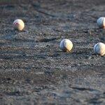 ボールボーイとは?プロ野球のバイト求人はどうやって探せばいいの?