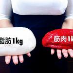 筋肉と脂肪の重さの違いとは?体積や重量をわかりやすく比較してみよう