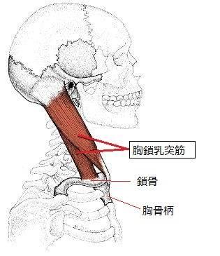 整体師が教える「骨盤力と姿勢」 (12769)
