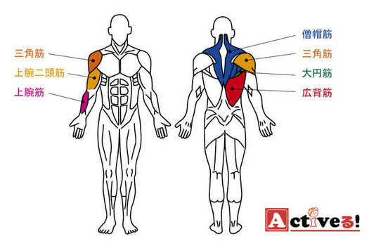 懸垂で鍛えることができる筋肉とは? (110735)