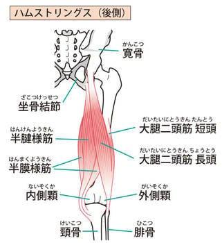 ハムストリングの筋肉とは? (112352)