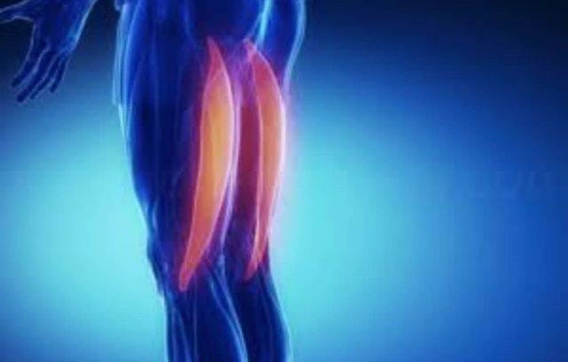 健康、医療、美容、スポーツ関係さんはInstagramを利用しています:「. 体の中でも、再生する力がある筋肉はどこかわかりますか⁉️ . 答えは太ももの裏(ハムストリングス)です👍 . 膝の靭帯を怪我した際に、手術時に採取してくる場所になりますが、ハムストリングスは再生する力があるため、ここから筋肉を一部とってくるんです🤗 . スゴイですよね✨ .…」 (59978)