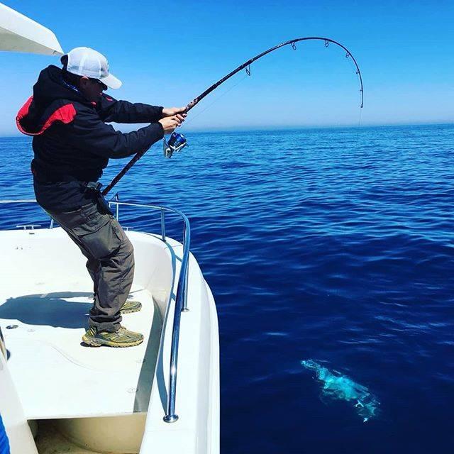"Vainer Mazzoni on Instagram: ""When you see silver.... 😍😍😍 . . . . . #teamfassa #biggamefishing #thewaterismystadium #angleraproved #gamakatsuitalia #sprofishing…"" (64050)"