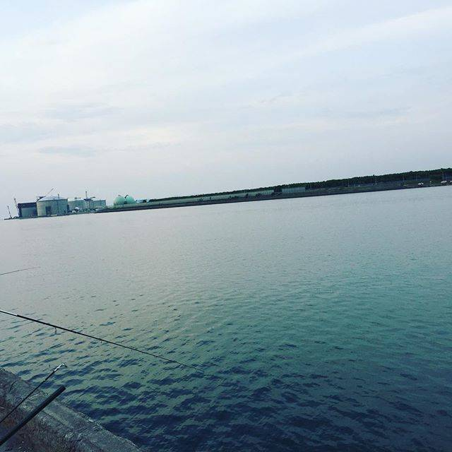"r1na ech1zenya on Instagram: ""マメイカ釣れるかなー^ ^?#まめいか #釣り"" (64473)"