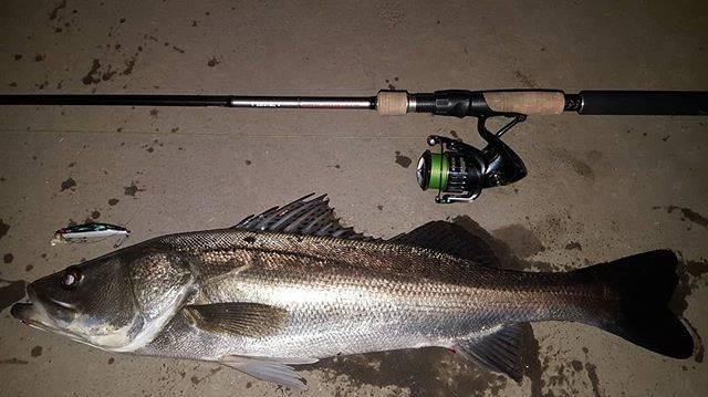 "@taka.0459 on Instagram: ""最近釣りに行けてなくて潮を見ても今日が今年の釣り納めと考え0時過ぎから開始。満潮からの下げで1本キャッチ!75cmの立派なシーバスでした。#釣り納め#シーバス#タイリクスズキ#国分川"" (65961)"