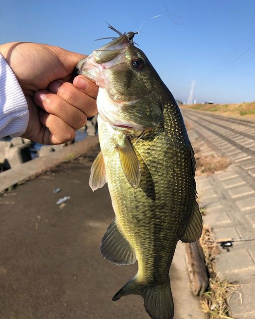 """TAKUMI.M on Instagram: """". 釣り納めで北浦水系に! . 鰐川でテトラの穴打ちで霞水系含めて初フィッシュ! 今年はいろんな釣りをやっててよかったってほんとに思った、、 来年もたくさん釣るぞー^ - ^ . ロッド レジットデザインwsc64L リール アルデバランbfs xg…"""" (97656)"""