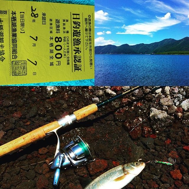 "@genma_kanta on Instagram: ""本日の釣果ウグイ、また行こうかな〜‼️#本栖湖釣り"" (100521)"
