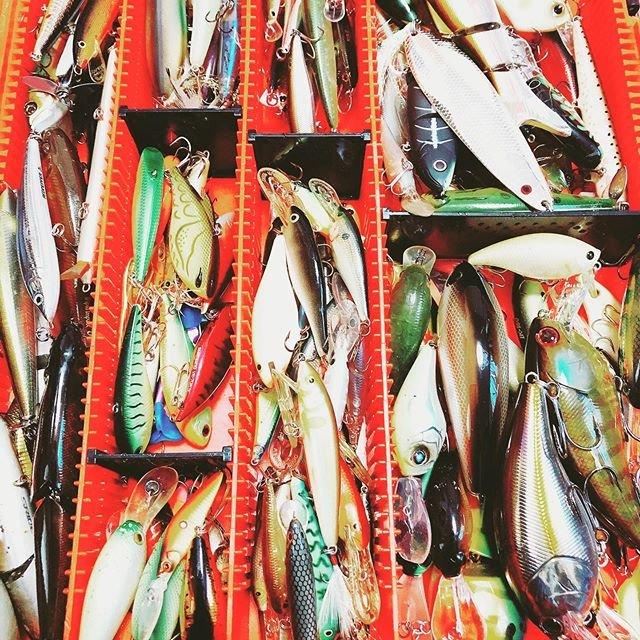 "Hasegawa on Instagram: ""釣り欲。#バス釣り#牛久沼#相模湖#合川ダム"" (105654)"