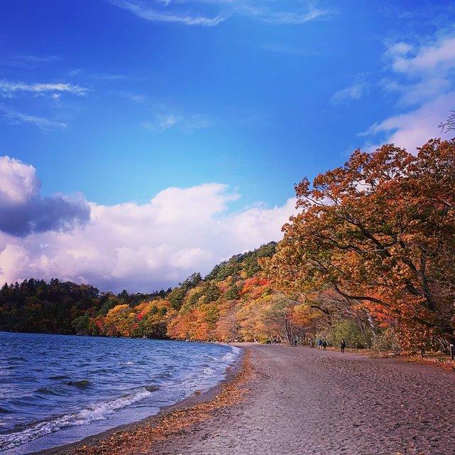 "Frankie Cheung on Instagram: ""十和田湖#十和田湖ヒメマス #紅葉🍁"" (114635)"