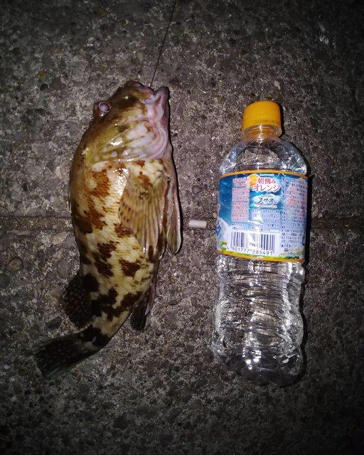 """まち on Instagram: """"#東扇島西公園#カサゴ#ぶっこみ久しぶりに30㎝近いカサゴが釣れました。"""" (117576)"""