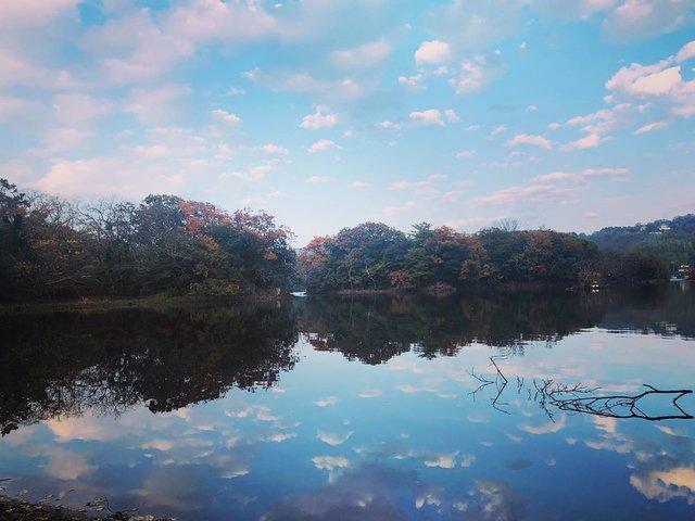 """ゆみ on Instagram: """"小さなお山に行こうと思ってましたが今日は一日中雨降り。 せっかくの休みなので温泉♨️入ってのんびり中です。 かれこれ3時間。 無料のマッサージチェアはありがたいです。  写真は今週始めの一碧湖。 近所に心落ち着く場所が色々あるのは幸せです。  2019.11.25撮影…"""" (117844)"""