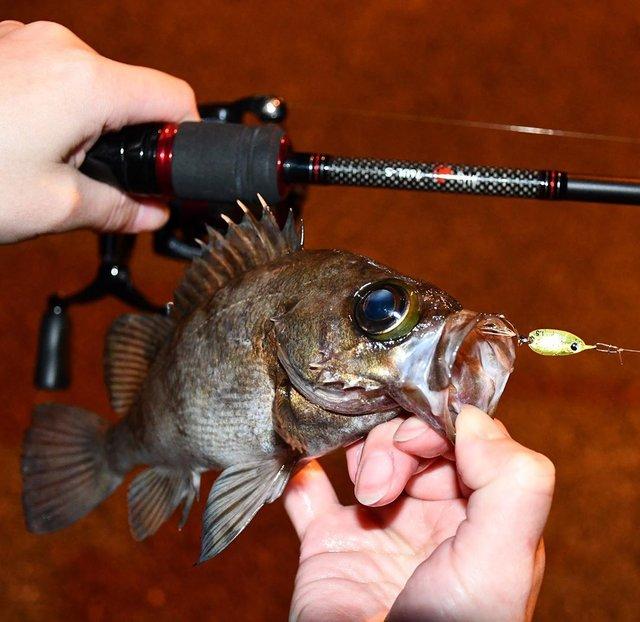 """なっつ on Instagram: """"今宵の装備は ○愛刀 大和の月下美人 ○飛び道具が魚子メタル舞(ひらり) となっております(笑) . #メバル #メバリング #ルーディーズ  #魚子メタルひらり #ロックフィッシュ #rockfish #rockfishing #月下美人 #DAIWA #fishing…"""" (117940)"""