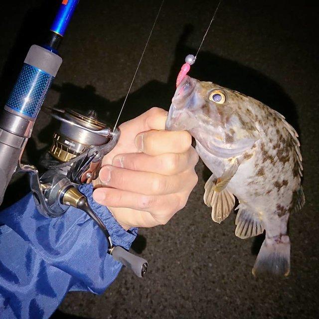 "Oonishi Takahiro on Instagram: ""かなりの東風…おまけに雨まで…1匹釣って退散。#rockfish #fishing #lurefishing #daiwafishing #daiwareels #exist #18exist #slpworks #apia #llx80mht #釣り #ルアー釣り…"" (117960)"