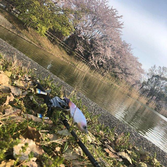 "kotarou fishing KNUbass on Instagram: ""新しい新生活を迎えてこれからどうなっていくんやろ?ちゃんとこんな自分がやってけんのかな…?とかいう不安もある中+世の中もコロナショックで経済、人も狂い始めてるこのご時世でも自然と向き合って釣りできるという幸せ…今日も短時間やったけどすごい気持ちがリセットできた👍…"" (123697)"