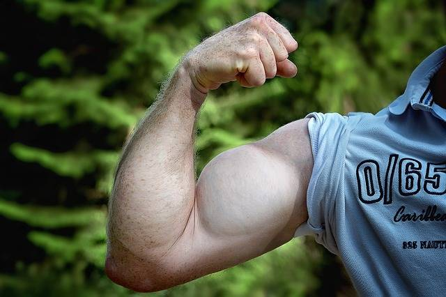 Free photo: Muscles, Arm, Be Mus Kelt, Man Arm - Free Image on Pixabay - 811479 (6265)