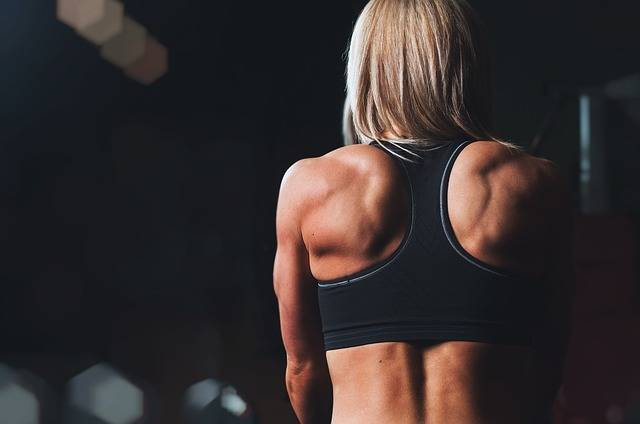 Free photo: Training, Rmuscles, Back, Shoulders - Free Image on Pixabay - 828741 (6306)