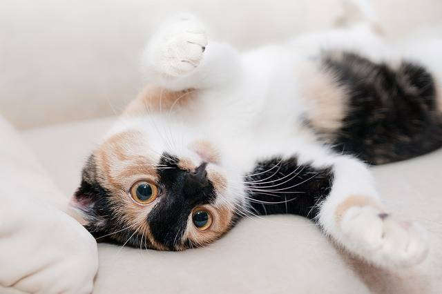 Free photo: Cat, Favorite, Relaxation, Rest - Free Image on Pixabay - 649164 (9290)